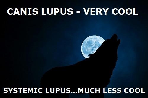 canis systemic lupus